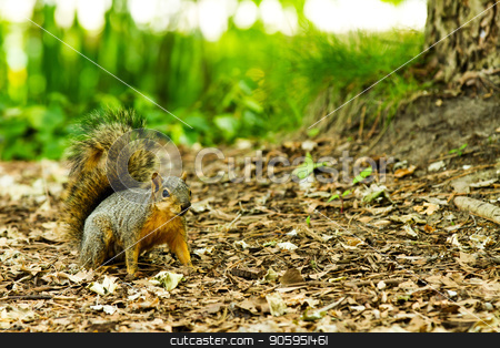 Four legged friend the squirrel getting ready to run stock photo, This animal heard a noise and was startled. by txking