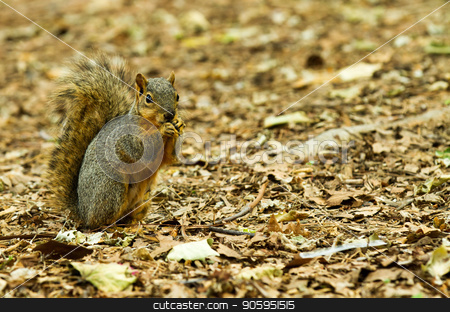 eating out in nature stock photo, Squirell eating something while fall is in the air by txking