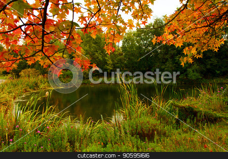 Fall Colors at the pond stock photo, Green grasses, leaves turning orange and the feeling of fall by txking