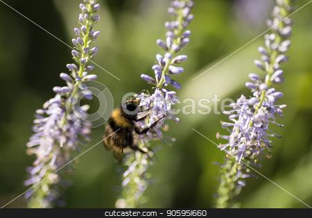 Beautiful meadow with wild flowers stock photo, Beautiful meadow with wild flowers and bees. by Alfira Poyarkova