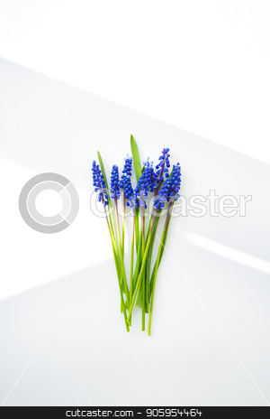 Beautiful composition - blue muscari lie on a white table stock photo, Beautiful composition - blue muscari lie on a white table. by Sergiy Artsaba