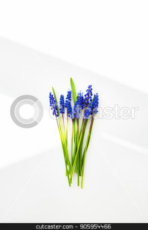Beautiful composition - blue muscari lie on a white table stock photo, Beautiful composition - blue muscari lie on a white table. by Sergiy Artsaba