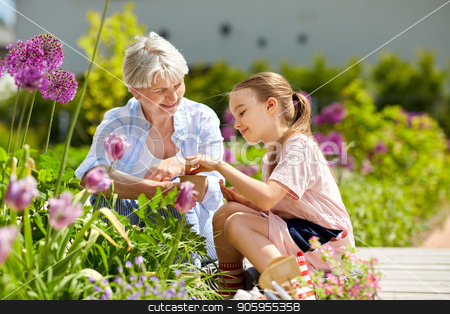 grandmother and girl seeding flowers at garden stock photo, gardening, family and people concept - happy grandmother and granddaughter seeding flowers at summer garden by Syda Productions