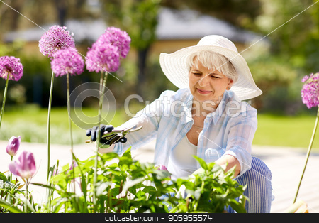 senior woman with garden pruner and allium flowers stock photo, gardening and people concept - happy senior woman with pruner taking care of allium flowers at summer garden by Syda Productions