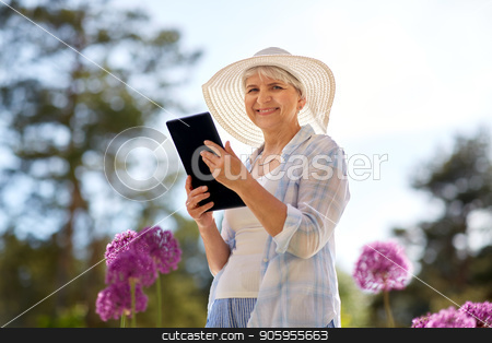 senior woman with tablet pc and flowers at garden stock photo, gardening, technology and people concept - happy senior woman with tablet pc computer and flowers at summer garden by Syda Productions