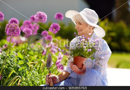 senior woman planting flowers at summer garden stock photo, gardening and people concept - happy senior woman planting flowers at summer garden by Syda Productions
