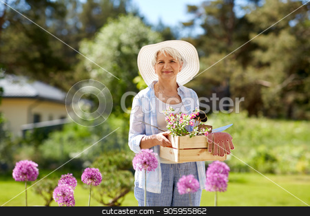 senior woman garden tools and flowers at summer stock photo, gardening and people concept - senior woman or gardener with garden tools and flowers in wooden box at summer by Syda Productions