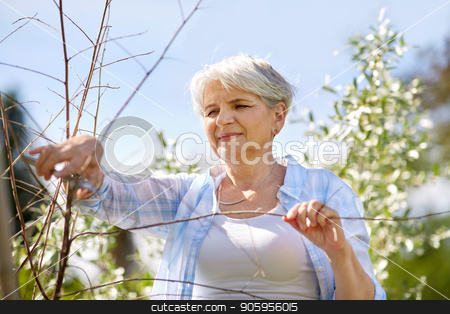 senior woman with garden pruner and flowers stock photo, gardening and people concept - happy senior woman with pruner taking care of flowers at summer garden by Syda Productions