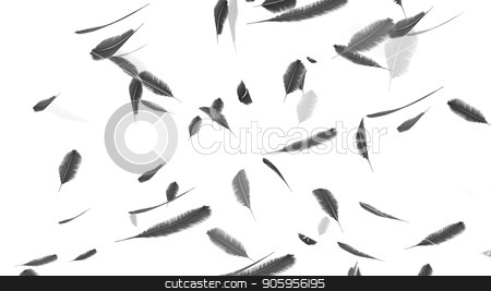 Falling feathers on a white background stock photo, Falling feathers on a white background 4k by bigcity31