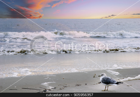 Gull in Surf stock photo, A seagull looking out to sea on the edge of the beach by Darryl Brooks
