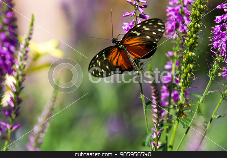 Butterfly up against some purple flowers stock photo, Shallow depth of field shot of a butterfly in some purple flowers by txking