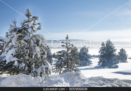 Cold winter morning stock photo, Fog in the hills with lots of snow covered trees. by txking