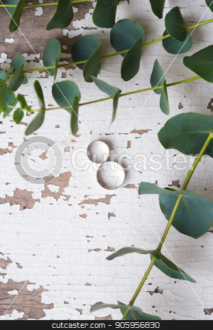 two wedding rings on a white table with old eucalyptus branches stock photo, two wedding rings on a white table with old eucalyptus branches by Sergiy Artsaba