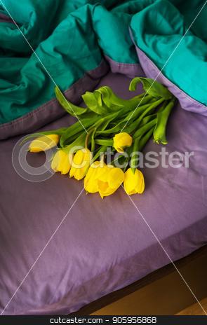 beautiful yellow tulips stock photo, Beautiful yellow tulips in a bed, close-up by Sergiy Artsaba