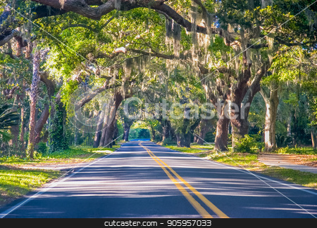 Road Through Oak Trees stock photo, A straight road through old southern oak trees by Darryl Brooks