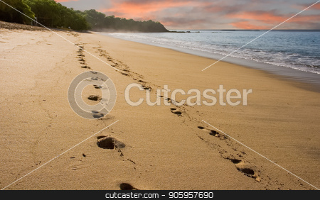 Footsteps on Early Morning Beach stock photo, Footsteps along an empty beach in early morning light by Darryl Brooks