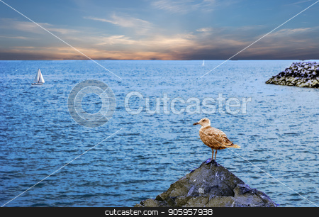 Seagull on Rock stock photo, A seagull on a pointed rock by the sea by Darryl Brooks