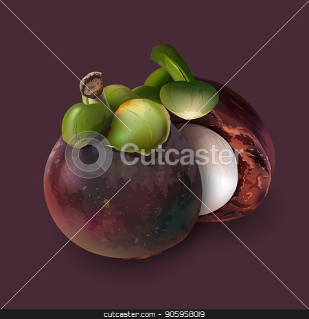Mangosteen on dark purple stock vector clipart, Mangosteen realistic illustration on dark purple background. by ConceptCafe
