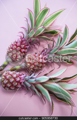 ineappless flowers on pinlk stock photo, Pineappless flowers on pinlk paper background by olinchuk