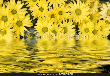 Daisies in Water stock photo, A nice  background of fresh yellow daisies by Darryl Brooks