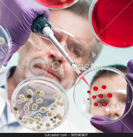 Life scientists researching in the health care laboratory. stock photo, Scientists researching in laboratory, pipetting cell culture samples and serum on LB agar medium. Life science professional grafting bacteria in the petri dishes. by kasto