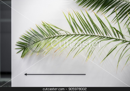 Green leaves on background of light wall stock photo, Light wall with a pointer on it in a luminous interior. There are big green leaves in front of the wall. Closeup. Horizontal. by bezikus