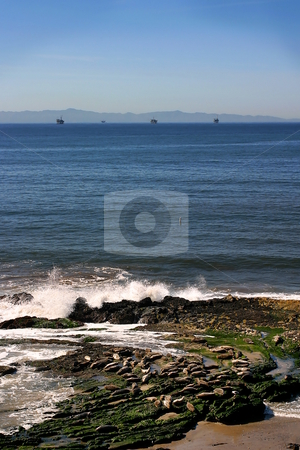 Seals stock photo, Carpinteria harbor seal rookery with the ocean in the background by Henrik Lehnerer