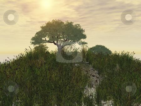 Tree in Field stock photo, Tree in field by John Teeter