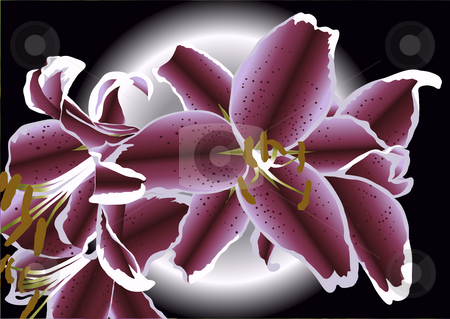 Drawing of lillies stock photo, Drawing of lillies with moon background by John Teeter