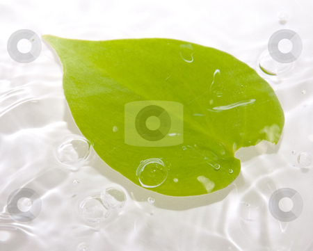 Leaf floating with bubbles stock photo, Leaf floating in water with waves and bubbles by John Teeter
