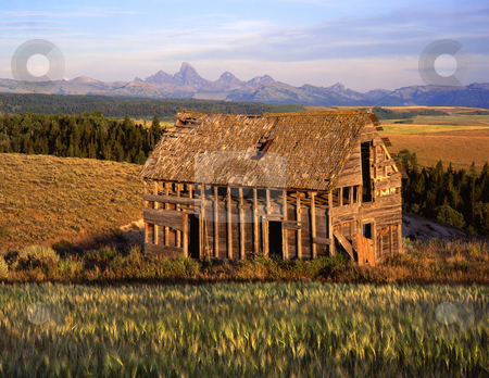Wheat Field and Tetons stock photo, An old house, wheat field and the Teton Mountain Range as seen from Idaho. by Mike Norton