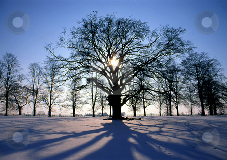 Sunset in winter stock photo, Sun setting through trees on a winters day by Paul Phillips