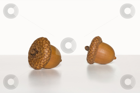 Two Acorns on white background stock photo, Macro shot of two acorns on a white background by Jean Larue-Frechette