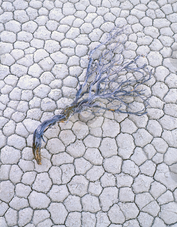 Playa & Sage Branch stock photo, A sage branch on dry lake bed known as a playa. by Mike Norton