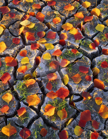 Leaves and Cracked Dirt stock photo, Leaves on cracked dirt photographed during the autumn season. by Mike Norton