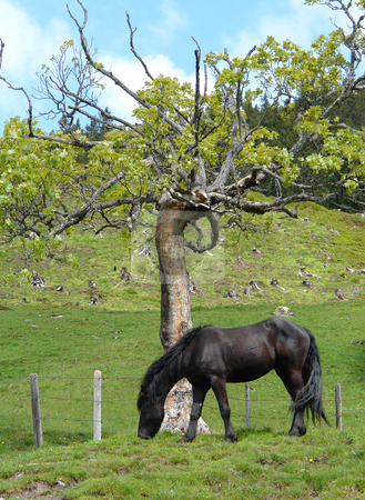 Horse on a Alpine meadow stock photo, Urlaub Pfingsten 2006 Hinterglemm ???sterreich by Wolfgang Heidasch