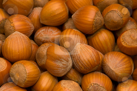 Hazelnuts in shell stock photo, Haseln???sse in der Schale by Wolfgang Heidasch