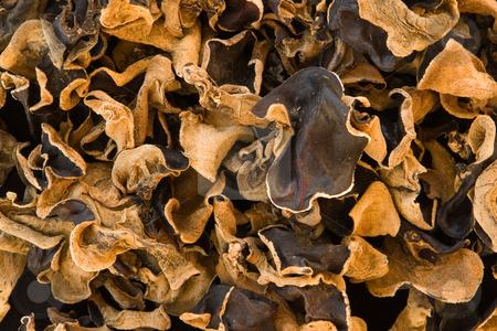 Judasohr (Auricularia auricula-judae, Auricularia polytricha) Black Fungus stock photo, Das Judasohr (Auricularia auricula-judae, Auricularia polytricha) - unter anderem auch als Mu-Err (zu deutsch ???Holzohr???), Holunderpilz, Black Fungus oder Wolkenohrenpilz bezeichnet - ist ein nahezu weltweit verbreiteter Speisepilz, der in vielen Gerichten der asiatischen und speziell auch der chinesischen K???che verwendet wird. by Wolfgang Heidasch