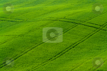 Getreidefeld in der Toskana stock photo, Getreidefeld in der Toskana by Wolfgang Heidasch