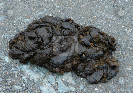 Cow poop stock photo, Osterreich by Wolfgang Heidasch