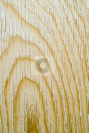 Close-up Wood Grain stock photo, Close-up view of the grain on a sheet of plywood by Richard Nelson