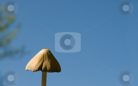 Wild Mushroom stock photo, A low angle view of a wild mushroom, shot against a blue sky with additional space for text by Richard Nelson