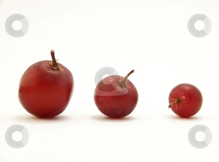 Three sizes of grapes on white stock photo, Image of three different sizes of red grapes, arranged in a descending order.  White background and horizontal orientation. by Jill Oliver