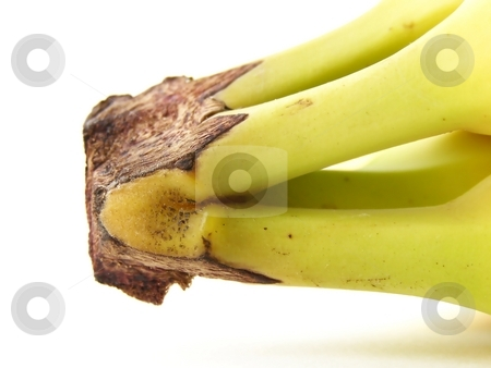 Banana Bunch 2 stock photo, Detail image of banana bunch stems. by Jill Oliver