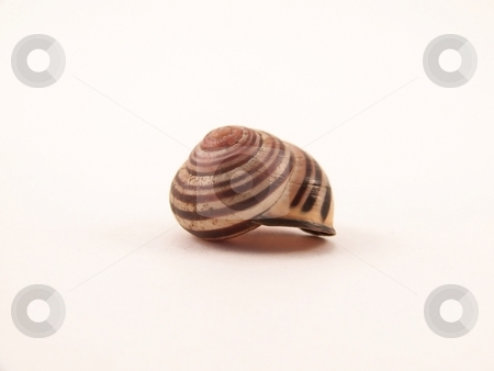 Snail shell stock photo, Image of a single striped snail shell. by Jill Oliver