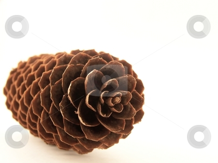 Pinecone stock photo, Image of a single pinecone, with focus on its center. by Jill Oliver