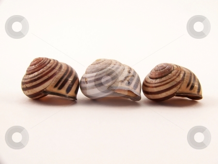 Three Snail Shells stock photo, Image of three striped, empty snail shells, lined up in a row. by Jill Oliver