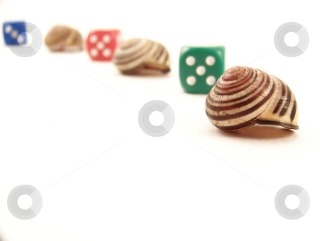 Line of Snail Shells and Die stock photo, Image of a curved line of striped snail shells and die, on white. by Jill Oliver