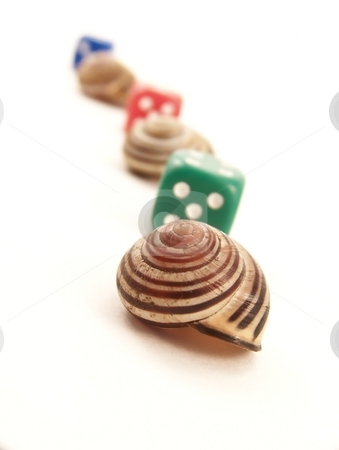 Line of Snail Shells and Die stock photo, Image of a line made of striped snail shells and die. by Jill Oliver