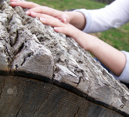 Old Log and Hands stock photo, Detail of the bark of an old log with hands visible in background. by Jill Oliver